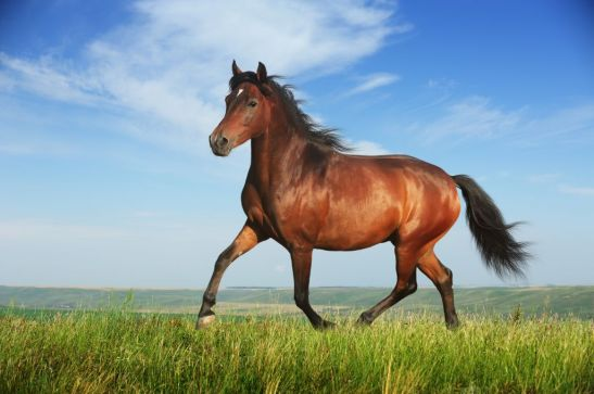 should-you-put-your-horse-on-loan-51b1ee7f46767